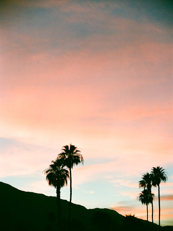 palm trees and mountain sunset