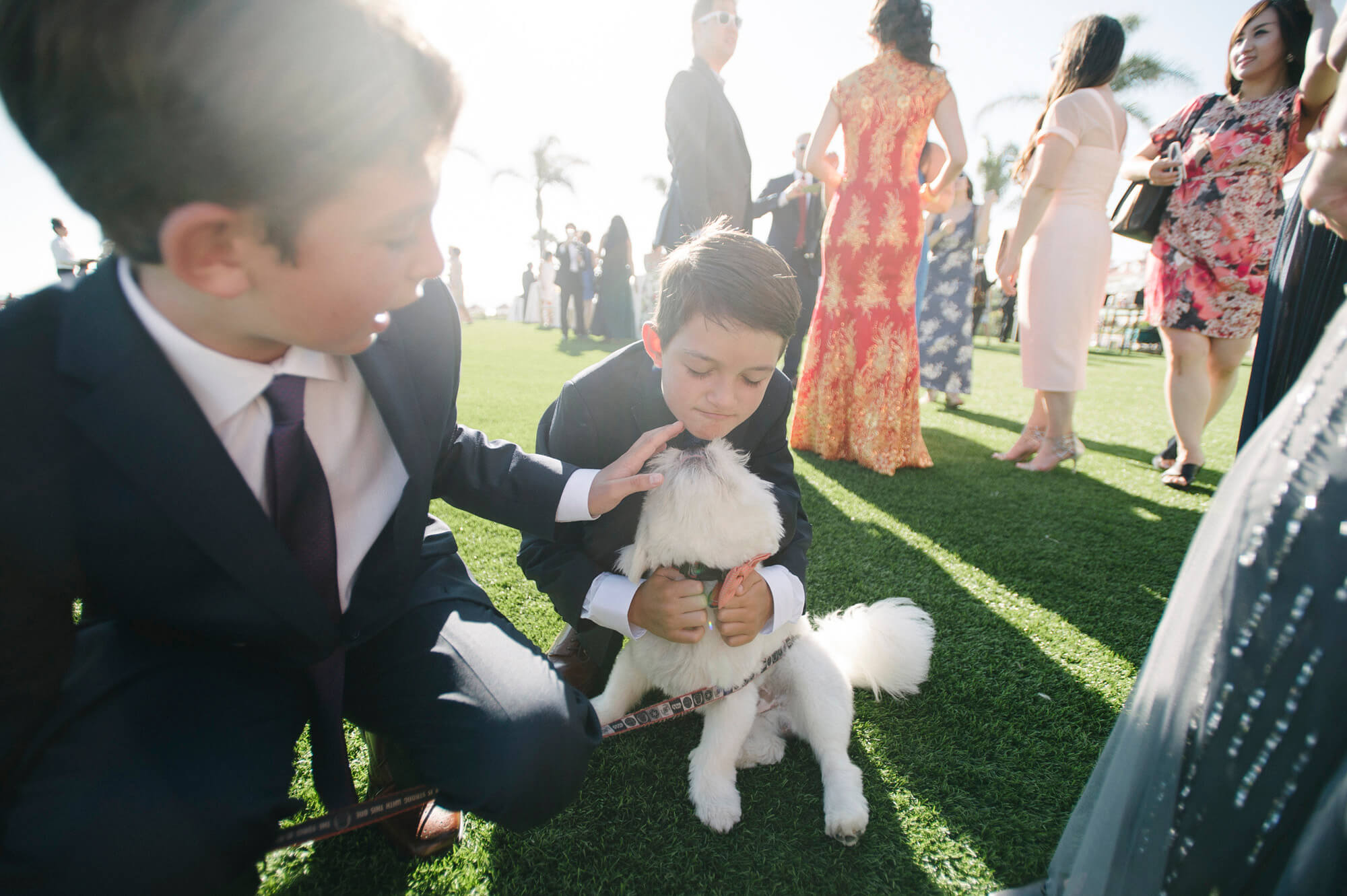 young guests play with small dog on windsor lawn