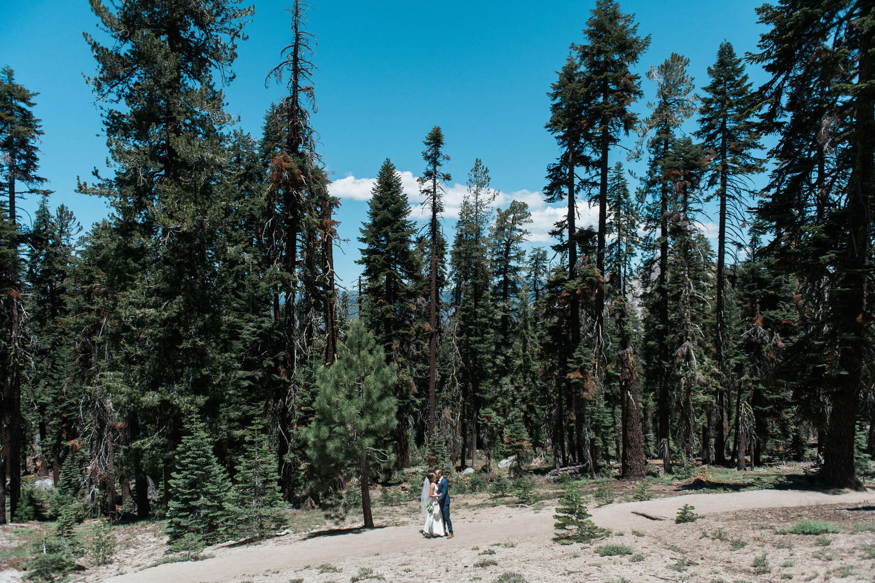 bride and groom kissing amongst large trees on trail to taft point